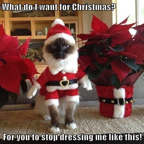 What do I want for Christmas?  For you to stop dressing me like this!