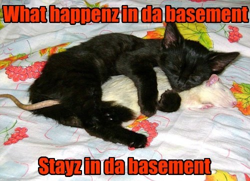basement cat,Cats,mouse