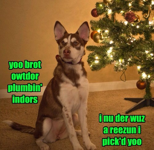 christmas,dogs,thank you,christmas tree
