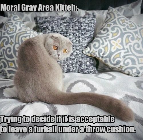 Moral Gray Area Kitteh:            Trying to decide if it is acceptable  to leave a furball under a throw cushion.