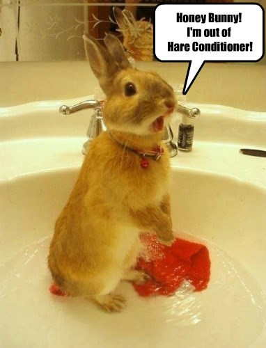 Honey Bunny!  I'm out of  Hare Conditioner!