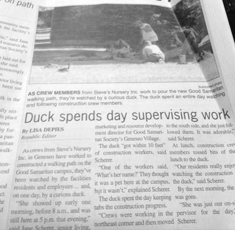 news,headline,ducks,weird