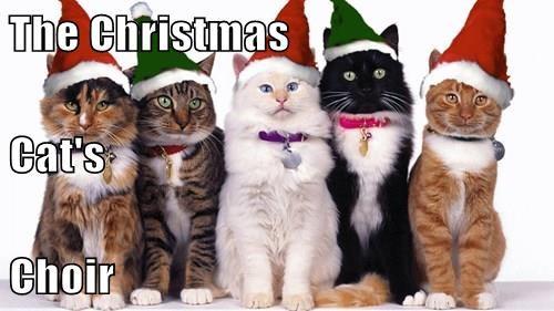 The Christmas Cat's Choir