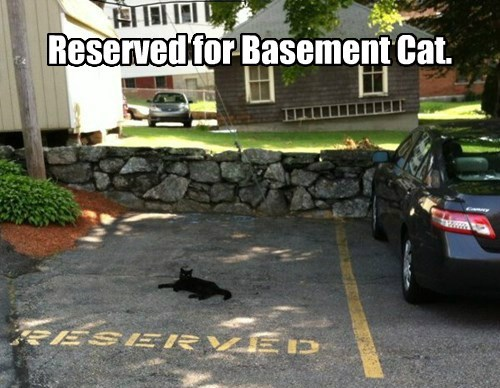 Reserved for Basement Cat.