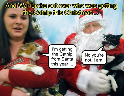 I'm getting the Catnip from Santa  this year ...