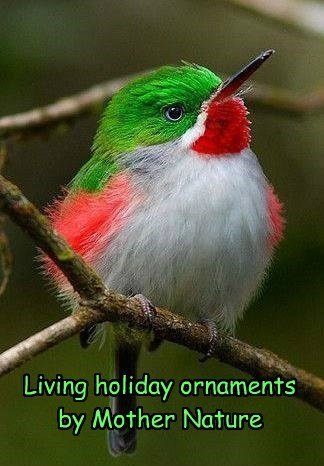 Living holiday ornaments  by Mother Nature