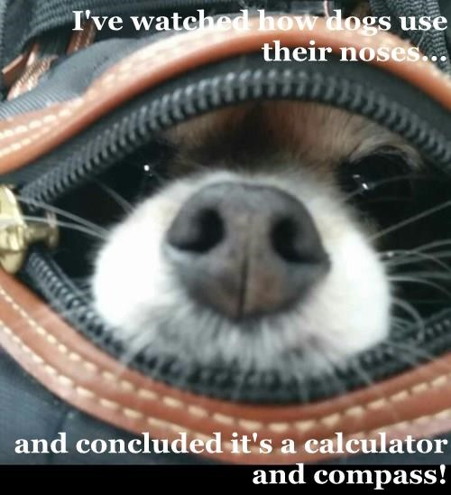 gps,dogs,nose,calculator