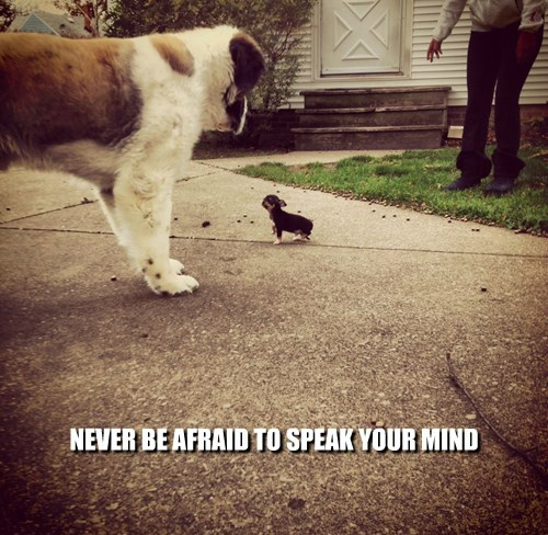 NEVER BE AFRAID TO SPEAK YOUR MIND