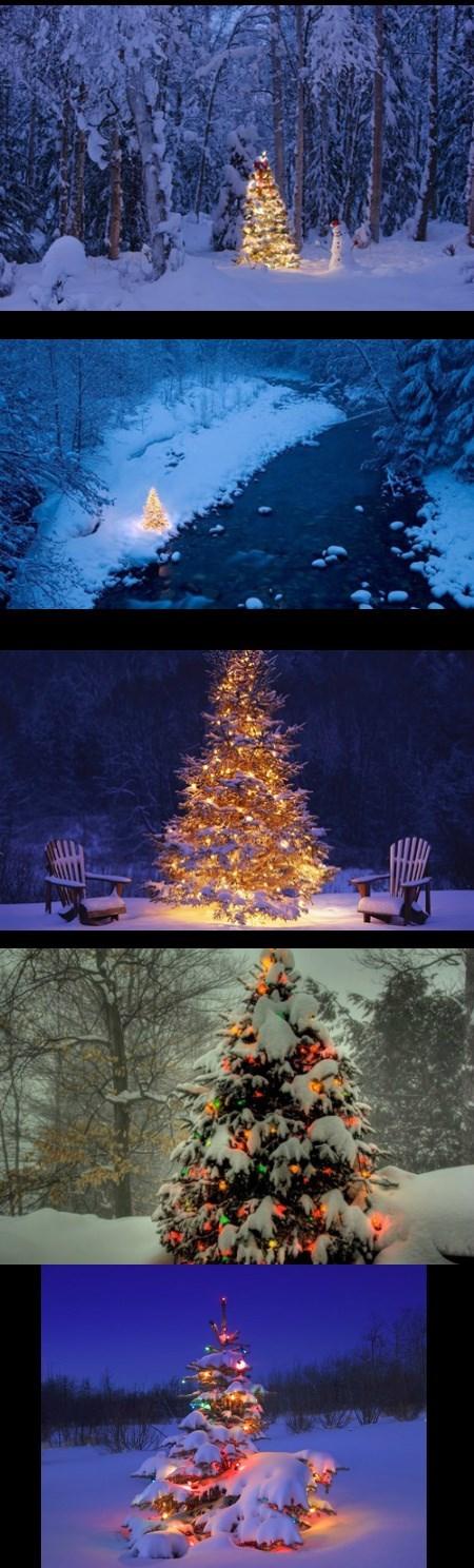 Oh, Christmas Tree! Second Verse!