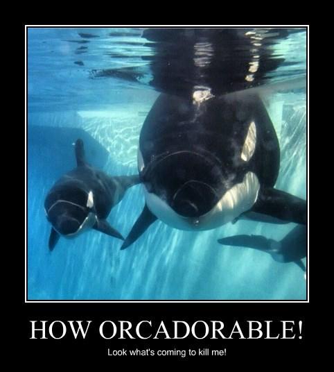 HOW ORCADORABLE!