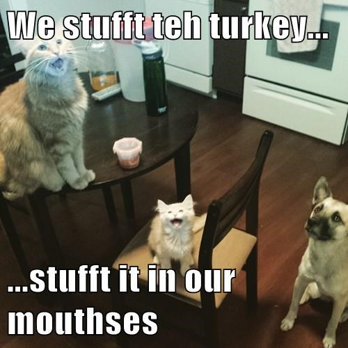 We stufft teh turkey...  ...stufft it in our mouthses