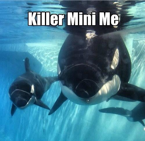 Killer Mini Me