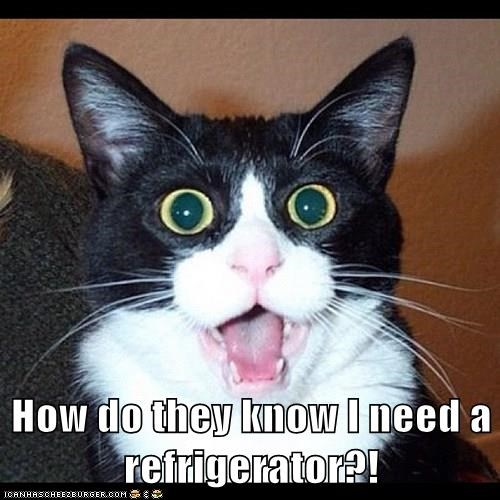 How do they know I need a refrigerator?!