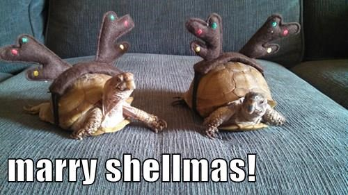 marry shellmas!