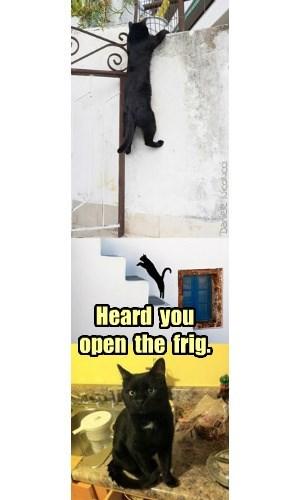 Heard  you  open  the  frig.