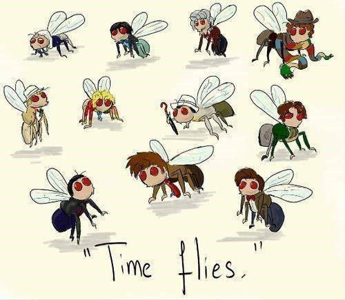 the doctor,puns,time travel,flies