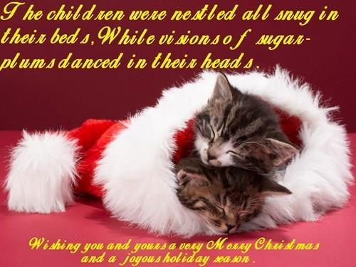 Wishing you a Purry Catmas