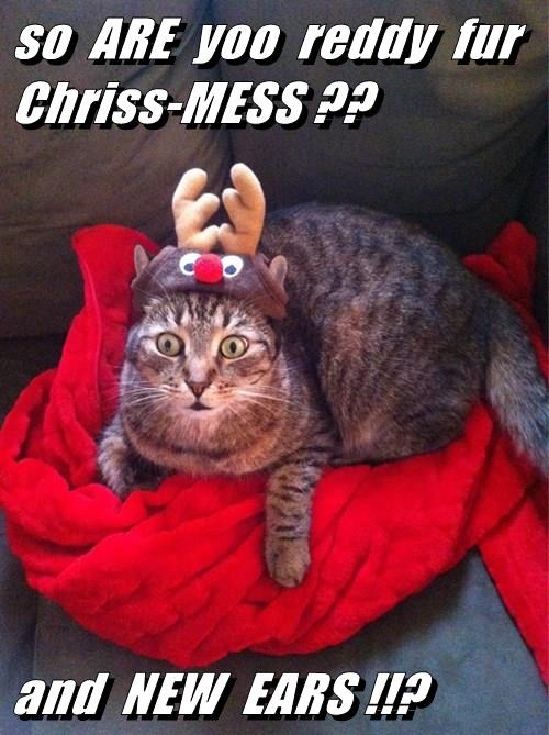so  ARE  yoo  reddy  fur  Chriss-MESS ??  and  NEW  EARS !!?