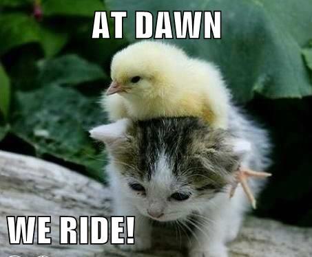 baby animals,chicken,kitten