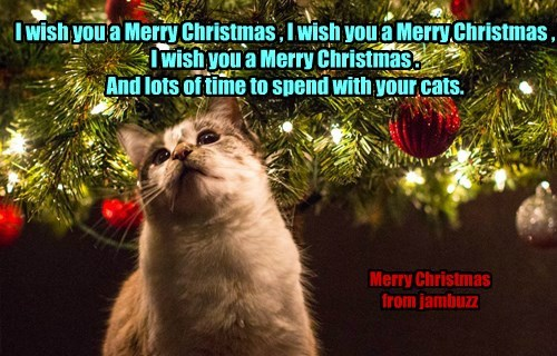 I wish you a Merry Christmas , I wish you a Merry Christmas , I wish you a Merry Christmas .  And lots of time to spend with your cats.