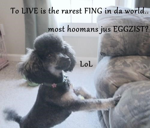 To LIVE is the rarest FING in da world.. most hoomans jus EGGZIST?           LoL