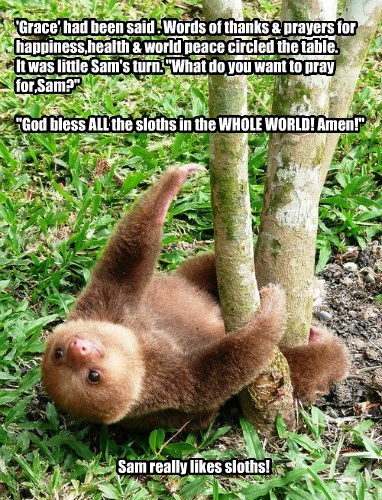 """'Grace' had been said . Words of thanks & prayers for happiness,health & world peace circled the table. It was little Sam's turn. """"What do you want to pray for,Sam?""""  """"God bless ALL the sloths in the WHOLE WORLD! Amen!"""""""
