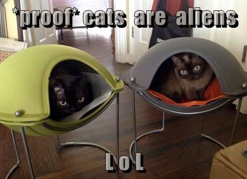 *proof* cats  are  aliens  L o L