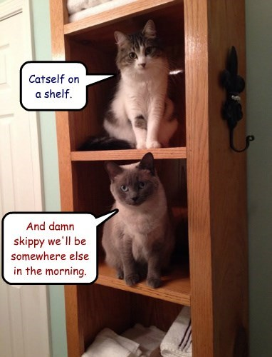 Catself on a shelf.