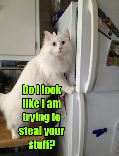 Do I look  like I am trying to steal your stuff?