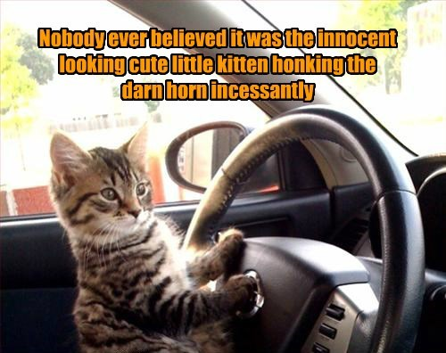 Nobody ever believed it was the innocent looking cute little kitten honking the darn horn incessantly