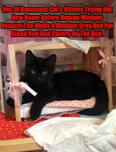 One Of Basement Cat's Kittens Trying Out New Room Before Human Minions Repaint The Walls A Medium Grey And Put Blood Red Bed Covers On The Bed.