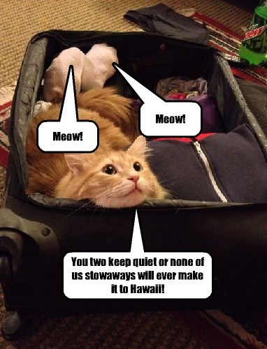 Momma cat never got invited to go on family vacations, so finally she decided to invite herself and her kittehs to go on a trip to the islands.