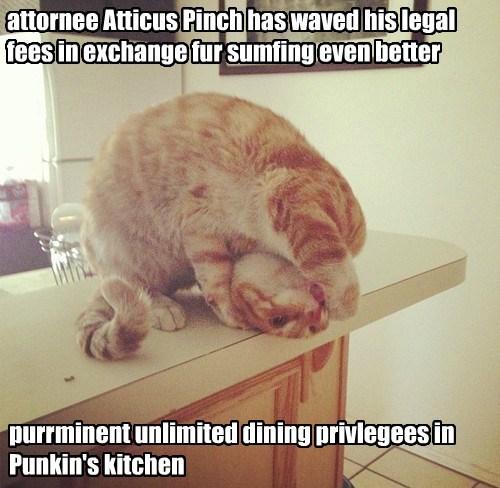 smart kitteh!