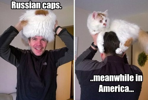 russia,america,Cats,hat