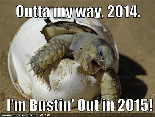 new year,resolution,turtle