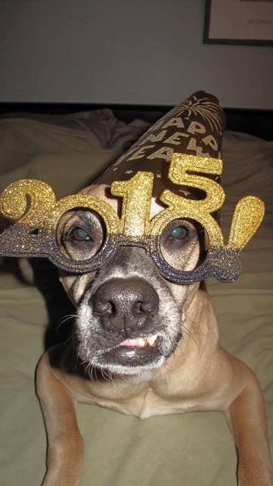 dogs,list,gifs,bears,new years eve,otters,owls,Party,hungover,Cats,giraffes