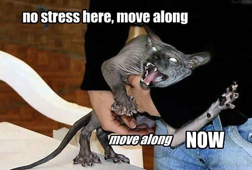 no stress here, move along