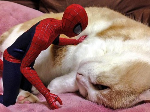 Amazing New Mother Cat Adopts and Nurses Abandoned Baby Spider-Man