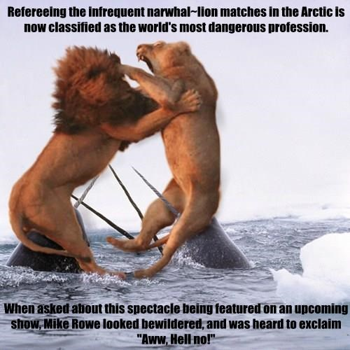 "Refereeing the infrequent narwhal~lion matches in the Arctic is now classified as the world's most dangerous profession.   When asked about this spectacle being featured on an upcoming show, Mike Rowe looked bewildered, and was heard to exclaim ""Aww, Hell"
