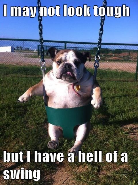 dogs,swing,tough,captions,funny