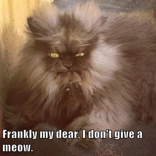Frankly my dear, I don't give a meow.
