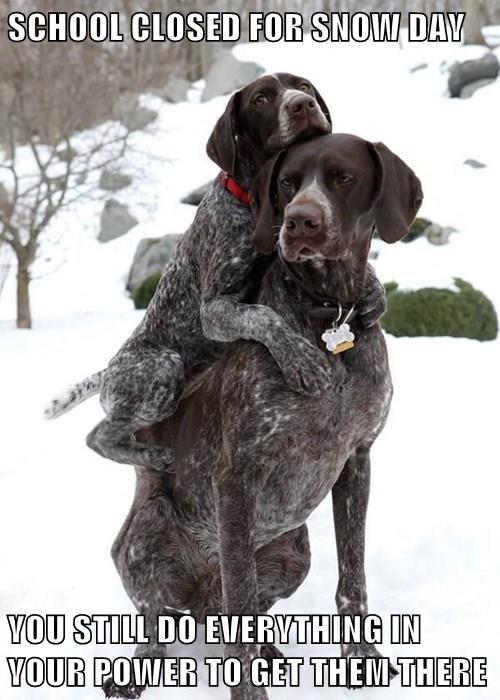 dogs,school,snow,cold
