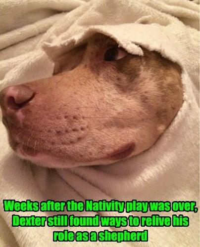 christmas,dogs,Nativity,blanket