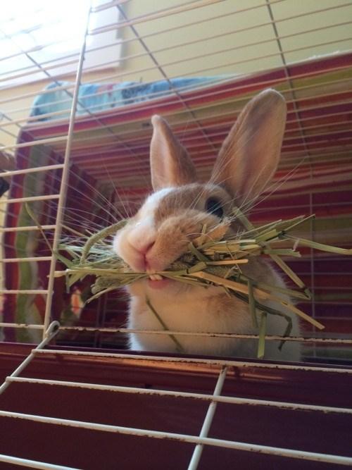 happy bunday,food,bunny