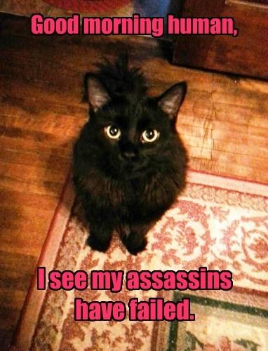 basement cat,good morning,assassin,Cats