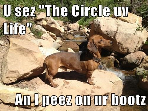 "U sez ""The Circle uv Life""   An I peez on ur bootz"