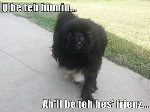 U be teh humin...  Ah'll be teh bes' frienz...