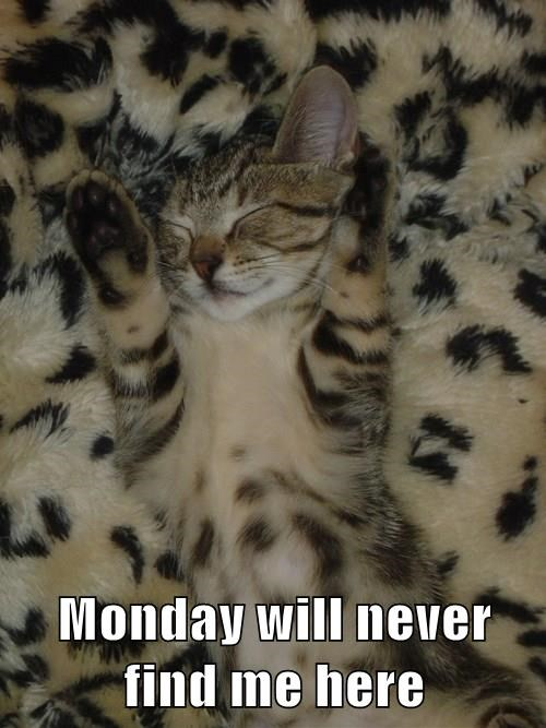 hide,camouflage,Cats,monday