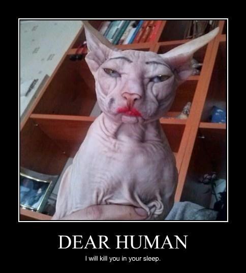 makeup,wtf,jerks,Cats,funny