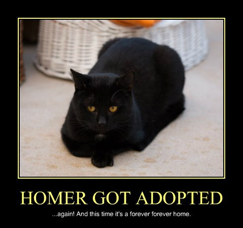 HOMER GOT ADOPTED